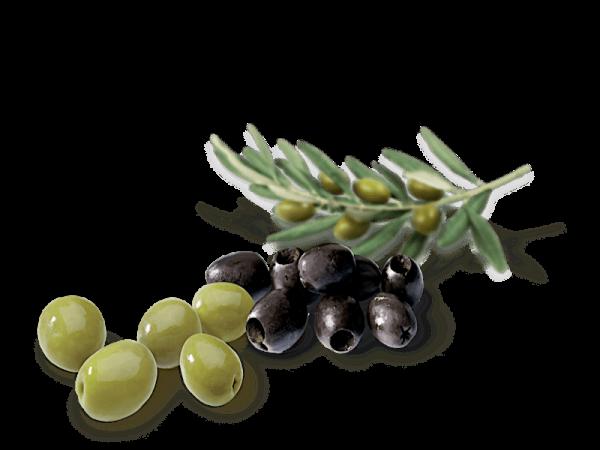 Le Olive verdi e nere