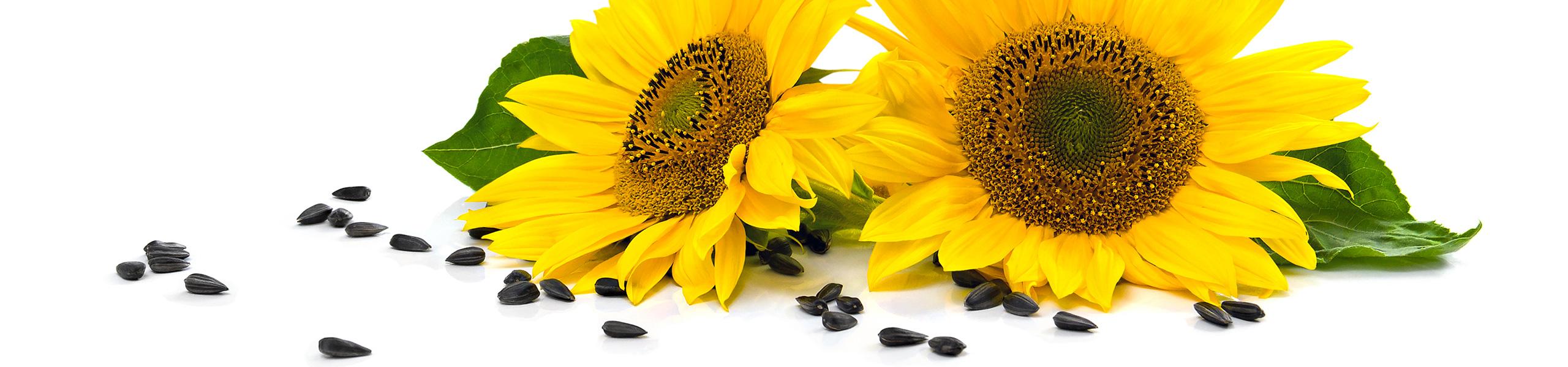 Olio di semi di girasole Altoleico